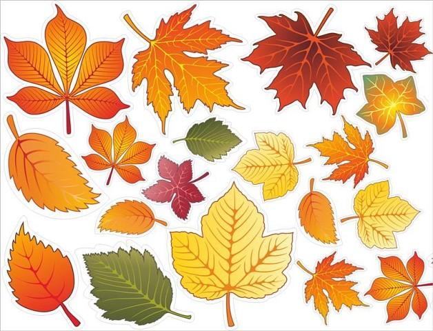 Осенние листья для оформления школьной доски или группы детского сада на 1 сентября
