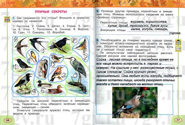 sochinenie-o-gorodskih-ptitsi-2-klass