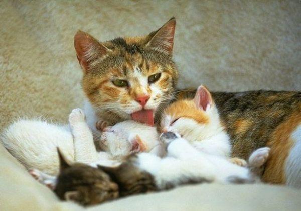 Как животные заботятся о своем потомстве 3 класс рисунок