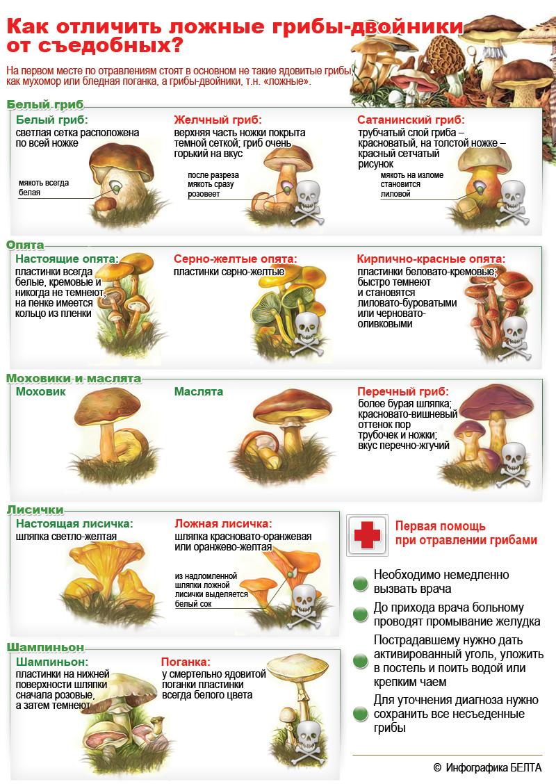 Картинки гриб мухомор