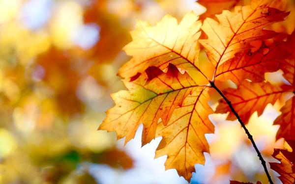 Деревья и кустарники осенью. Осенние изменения