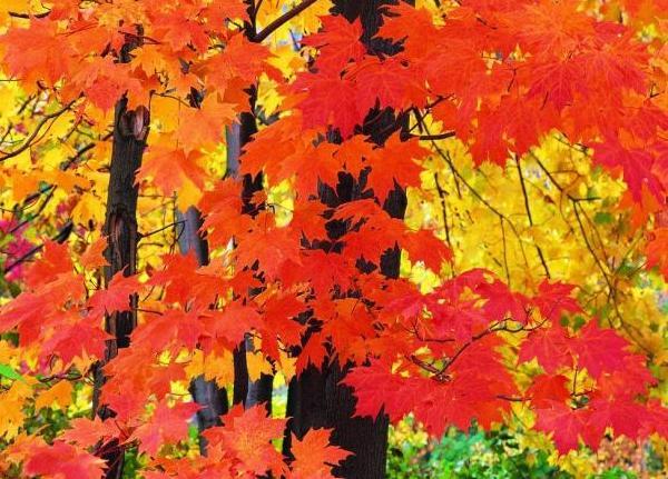 Доклад почему желтеют листья осенью 8936