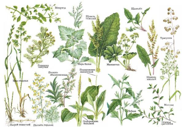 Написать доклад о растении леса черник для 3 класса как правильно написать оформит реферат