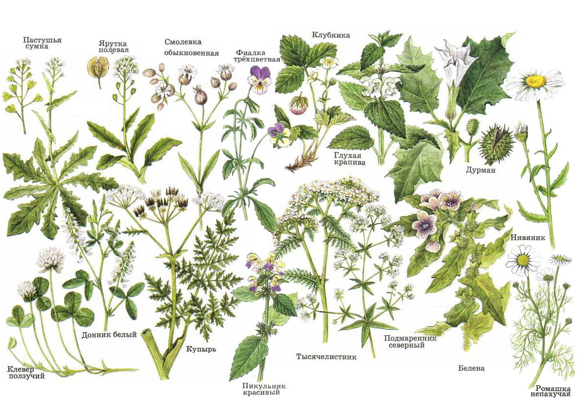 куклы своими травянистые растения названия с картинками комплектом, инструкциями