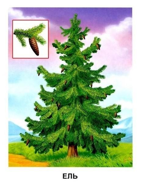 Названия деревьев и их листья