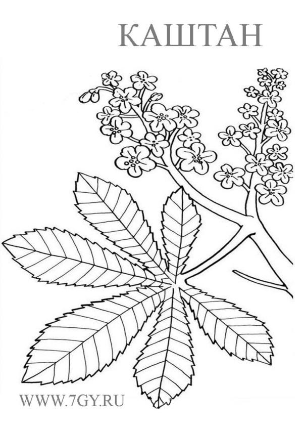 Каштановый лист раскраска