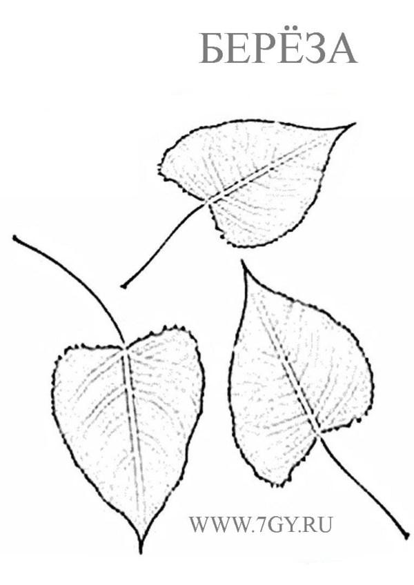 Березовый лист раскраска
