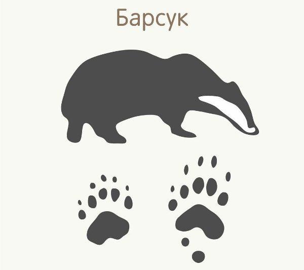 базарбаева картинки следы диких животных продаже