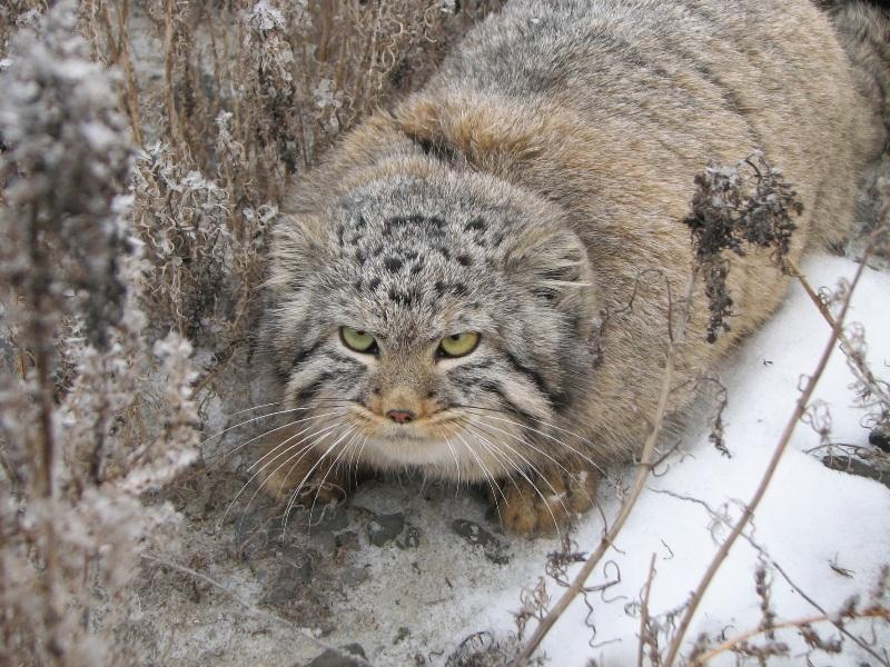 Написать доклад про животных реферат экг скачать