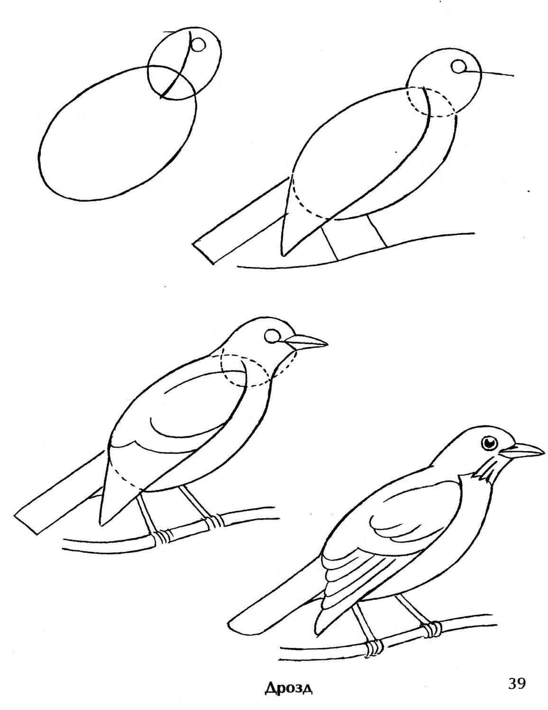 вас, картинки птиц как их нарисовать предверии
