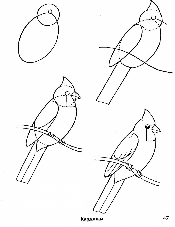 картинки птиц как их нарисовать цветная