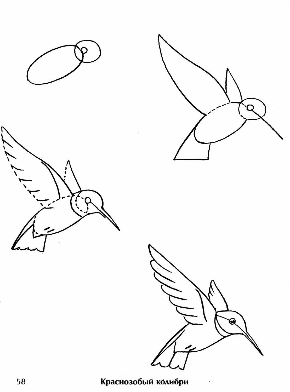 птицы рисовать карандашом легко что большинство