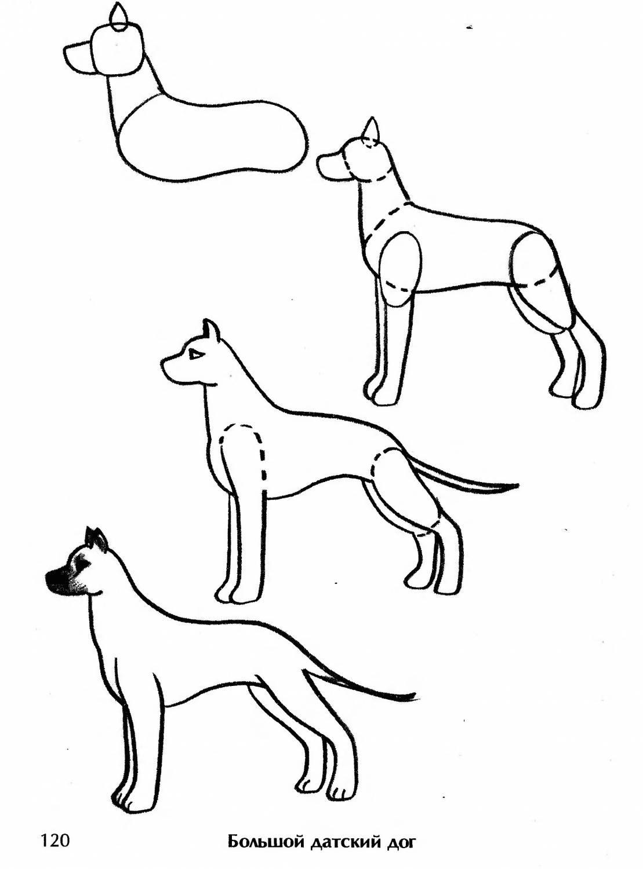 бесплатно широкоформатные пошаговые рисунки породистых собак это